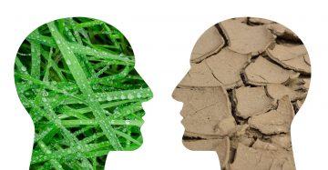 AMBIENTE E INNOVAZIONE: ESPERTI INTERNAZIONALI All'OPERA CON LA FIDU